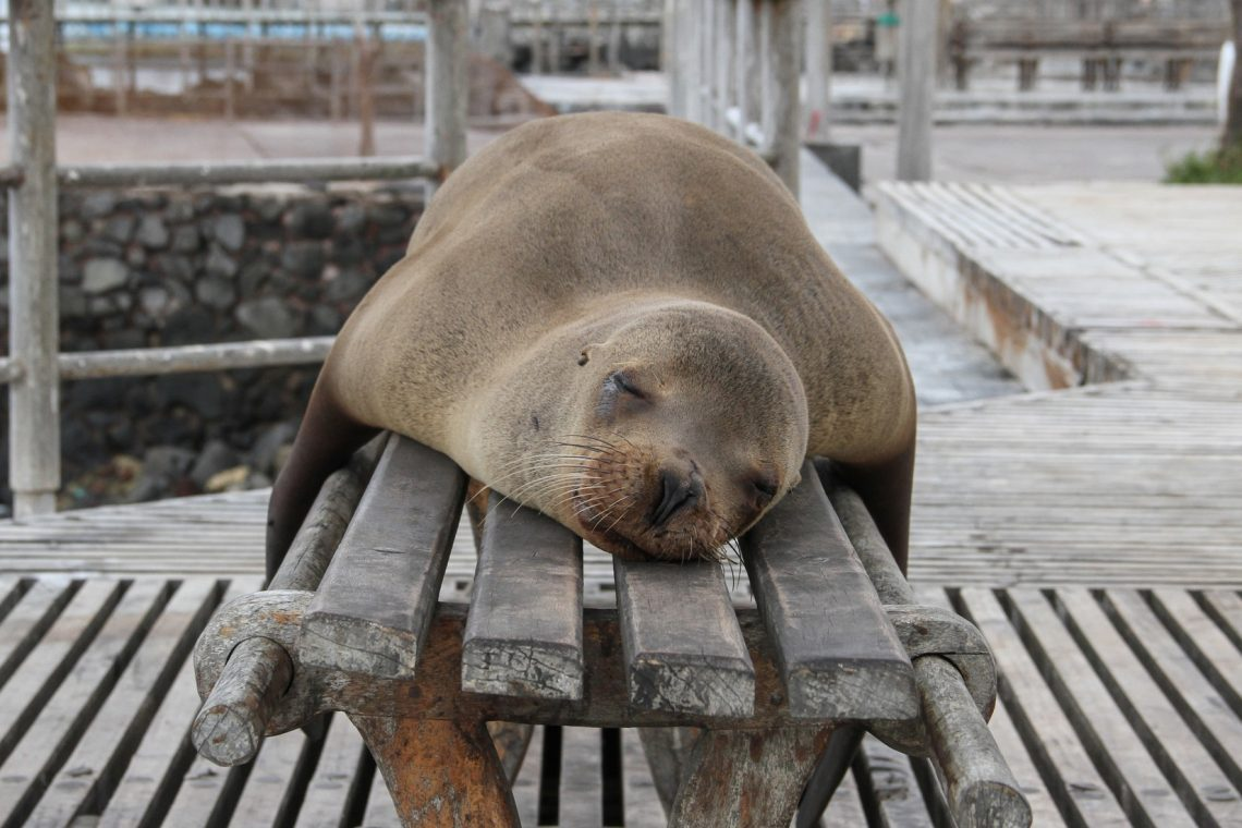 sleepy seal is sleepy